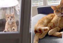 chat visite couple apartment