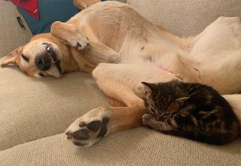 chien soccupe chatons sauvés adoption