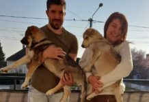 couple adopte chien frère aveugle