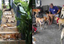 couple déménage île thaïlandaise adopte 15 chiens sans abri