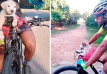 cycliste chiot côté route change vie