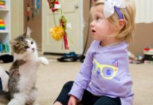 Scarlette fille bras perdu adopte chaton membre manquant