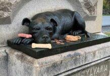 gens continuent laisser os monument chien héroïque