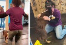 heureux chien perdu réunit maman Liddie, Kirstin