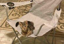 homme rentre maison trouve chat chaise Nigel