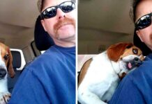 homme sauve chiot euthanasié câlin