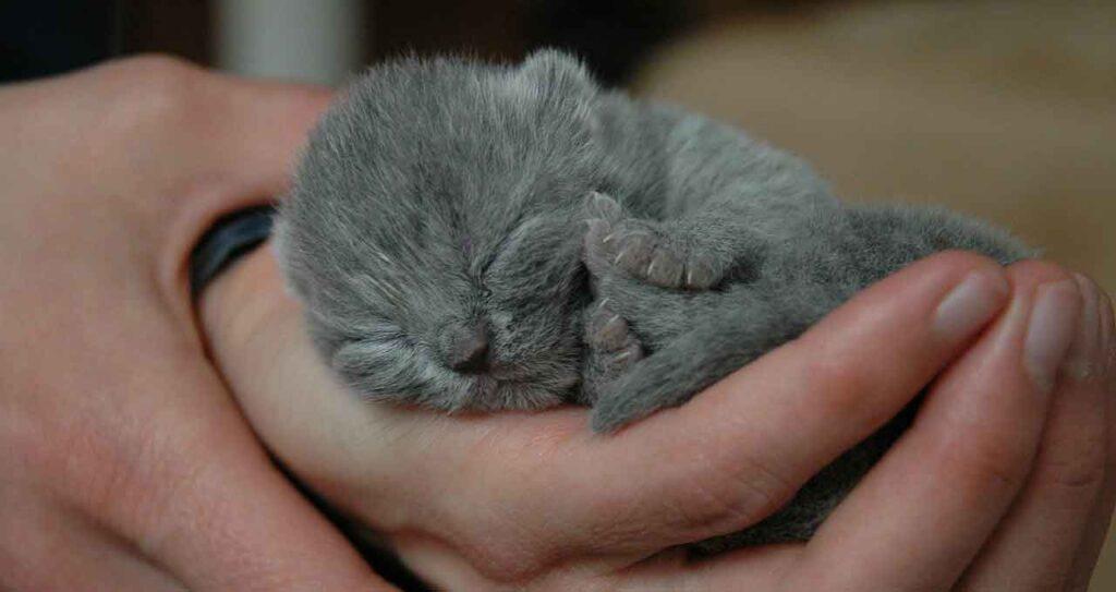 nourrir chaton nouveau-né