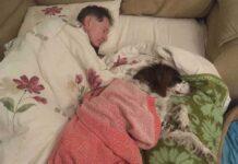 papa dort vieux chien canapé lui tenir compagnie