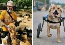 refuge animaux chiens handicapés