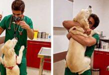 vétérinaire façon adorable vacciner chiens