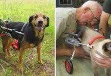 vétérinaire retraite fabrique fauteuils roulants animaux handicapés