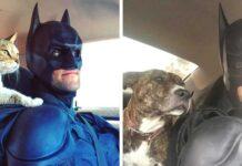 batman vie réelle Sauve animaux