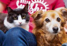 chat ami chien famille adopté
