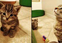 chat heureux trouve aide chaton