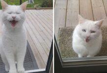 chat rend visite voisin tous les jours recherche friandises amour