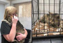 chat retrouve propriétaire disparu depuis 11 ans