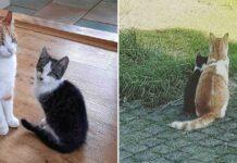 chat se fait ami chaton trouvé jardin ramène maison