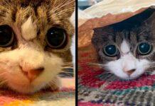 chat yeux tristes remercie femme sauvée