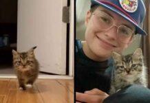 chaton sans-abri entre appartement devient chez lui