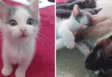 chaton seul chat accepte devient membre famille