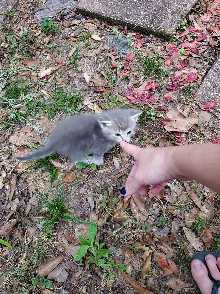 chatte errante présente bébés femme nourrit