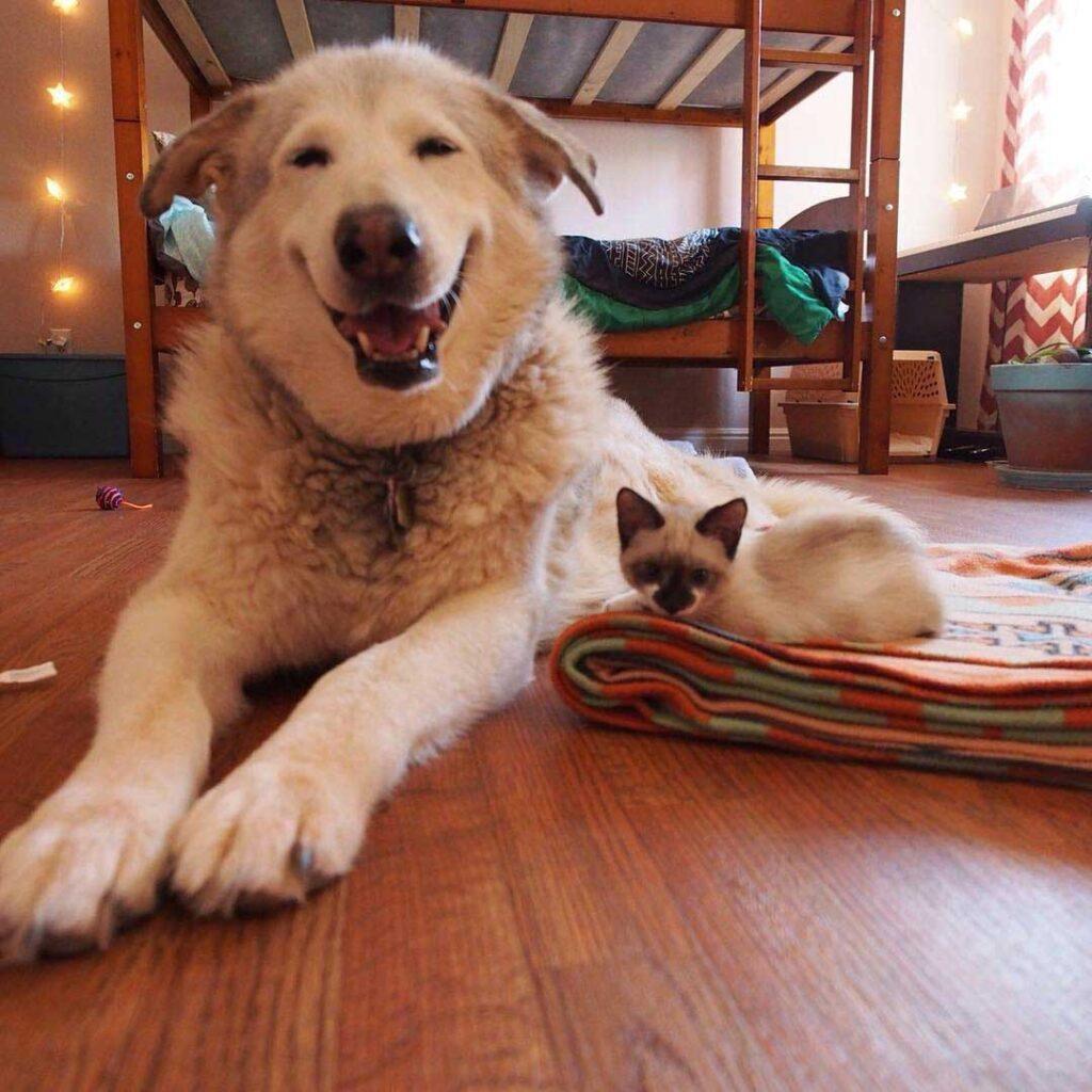 chien ami perdu 4 chatons adoptifs