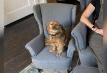 chien arrête pas sourire chaise maman