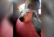 chien détend homme sauver ramené maison