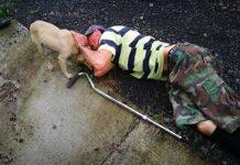 chien fidèle cherche aide père blessé