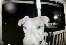 chien perdu rentre maison sonne porte