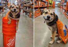 chien sauvé devient employé mignon magasin