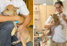 chien sauve famille cinq feu maison