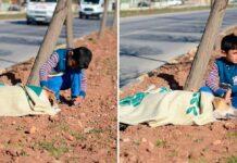 enfant réfugié prend soin chien renversé voiture