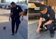 petit chiot suit policiers aide