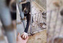 refuge chien prend main chaque personne passe