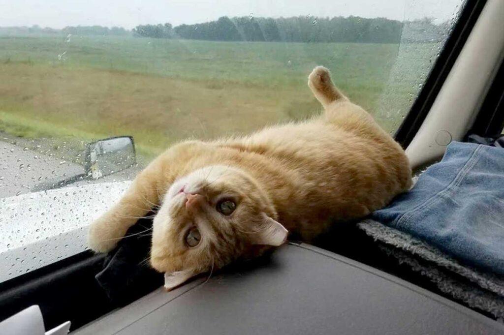 camionneur solitaire adopte chat errant