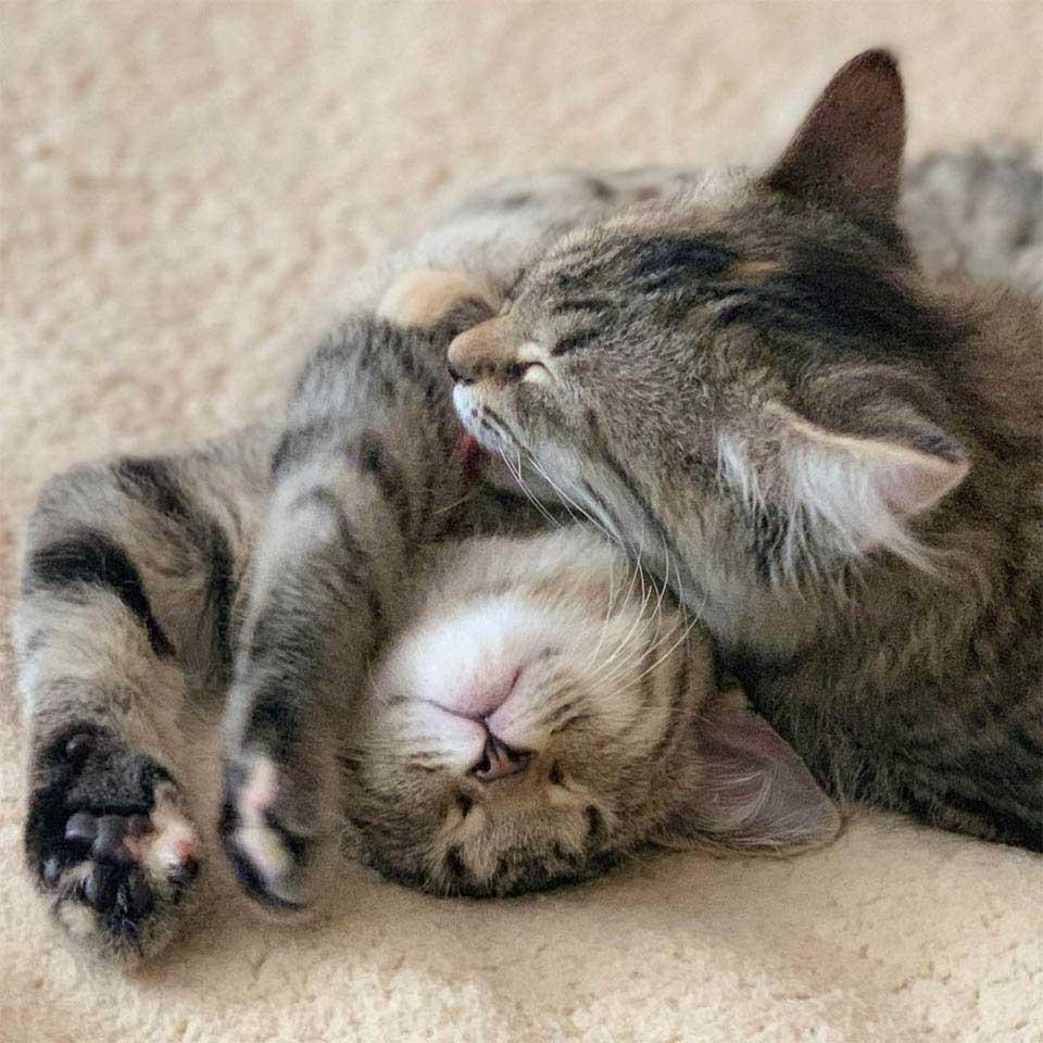famille voulait adopter deux chatons prend troisième