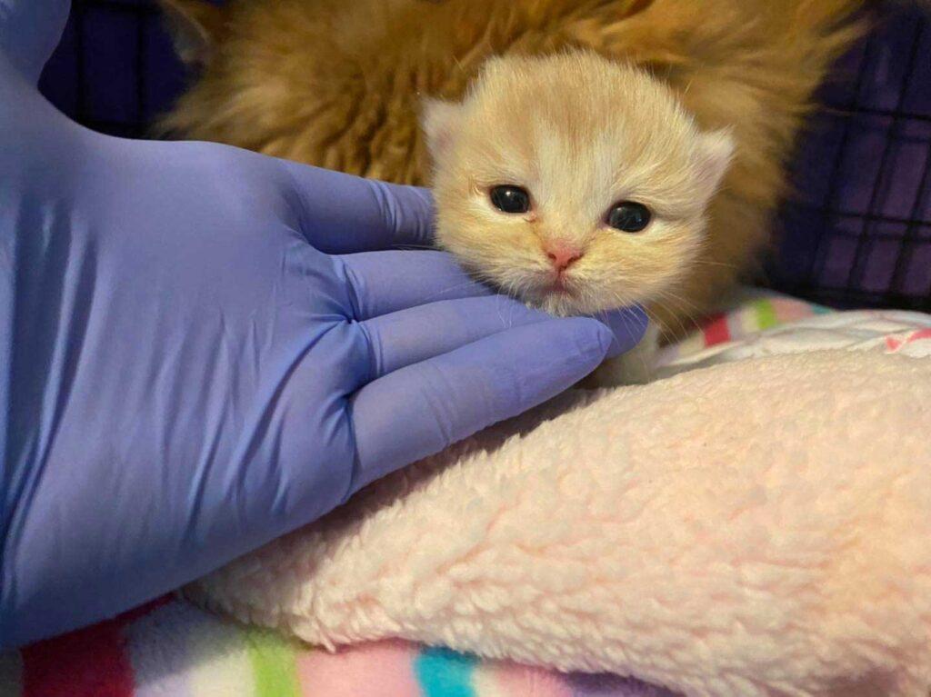 Adorable chaton nouveau-né