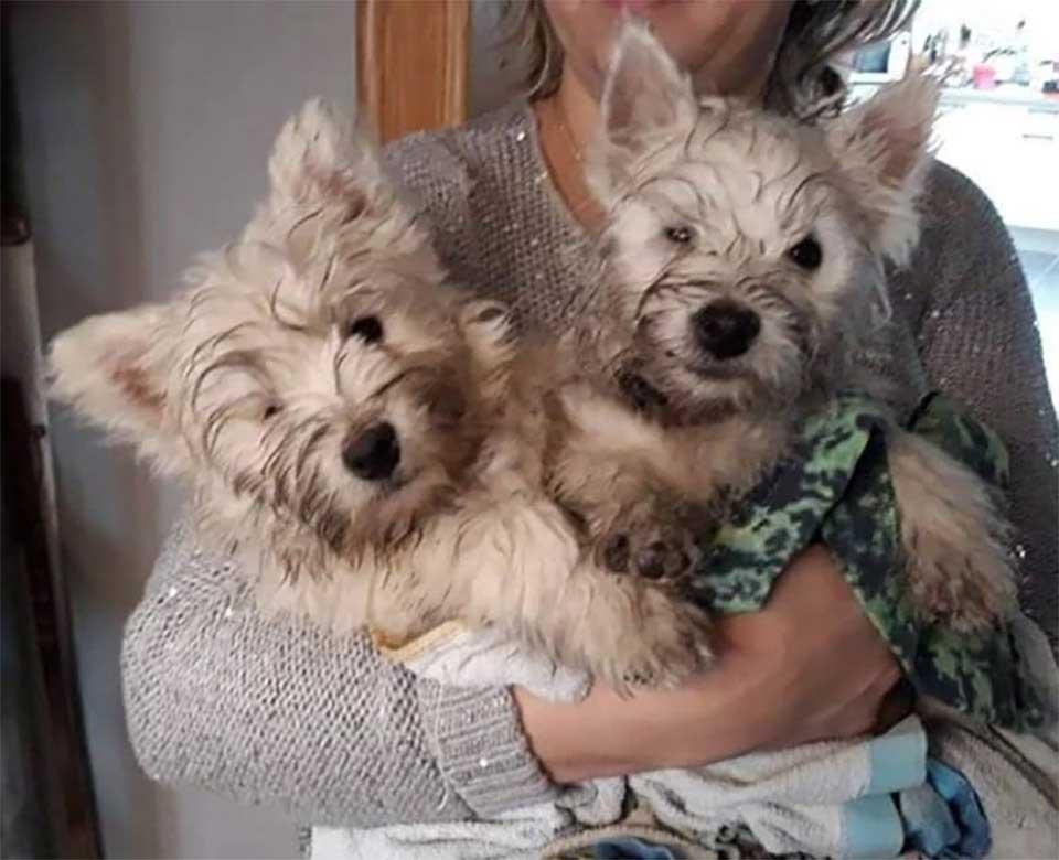 Chiots jumeaux sauvés
