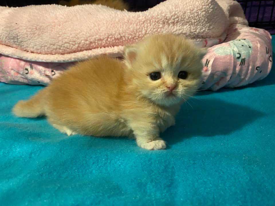 Joli-kitty-orange