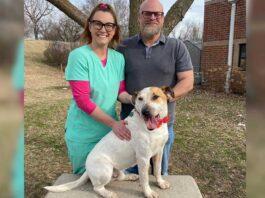 Merrick chien trouve foyer après cinq ans refuge