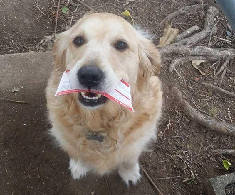 Pippa reçoit une lettre