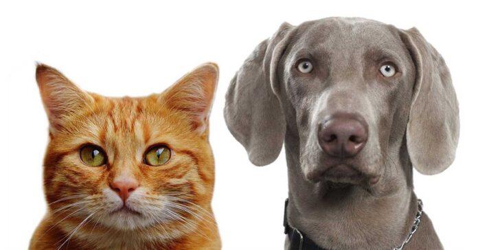 Qui est plus intelligent chats ou chiens