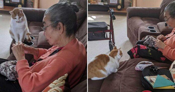 chat attend patiemment grand-mère répare jouet