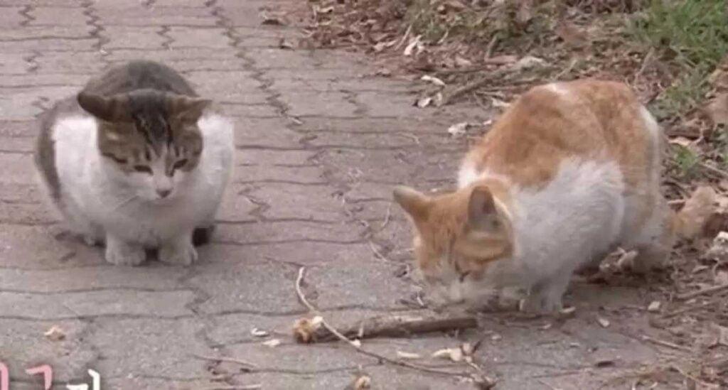 chat errant nourrir surveiller ami chat handicapé