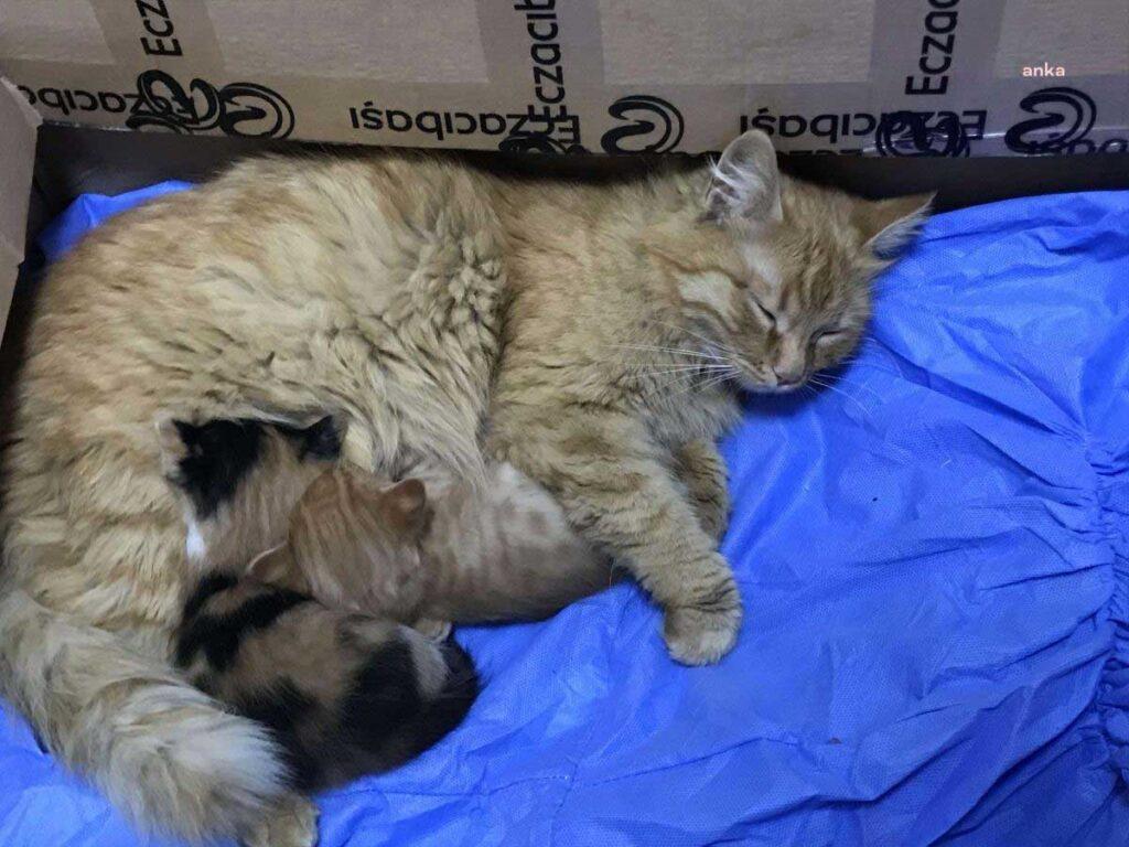 chat maman chatons en sécurité