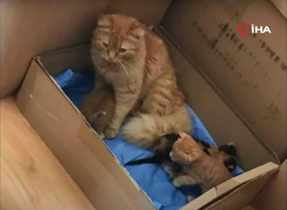 chat maman chatons