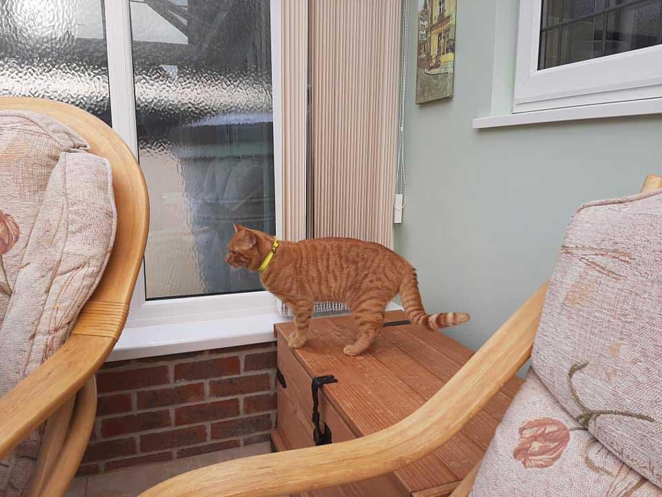 chat marche 38 km visite vieux voisin
