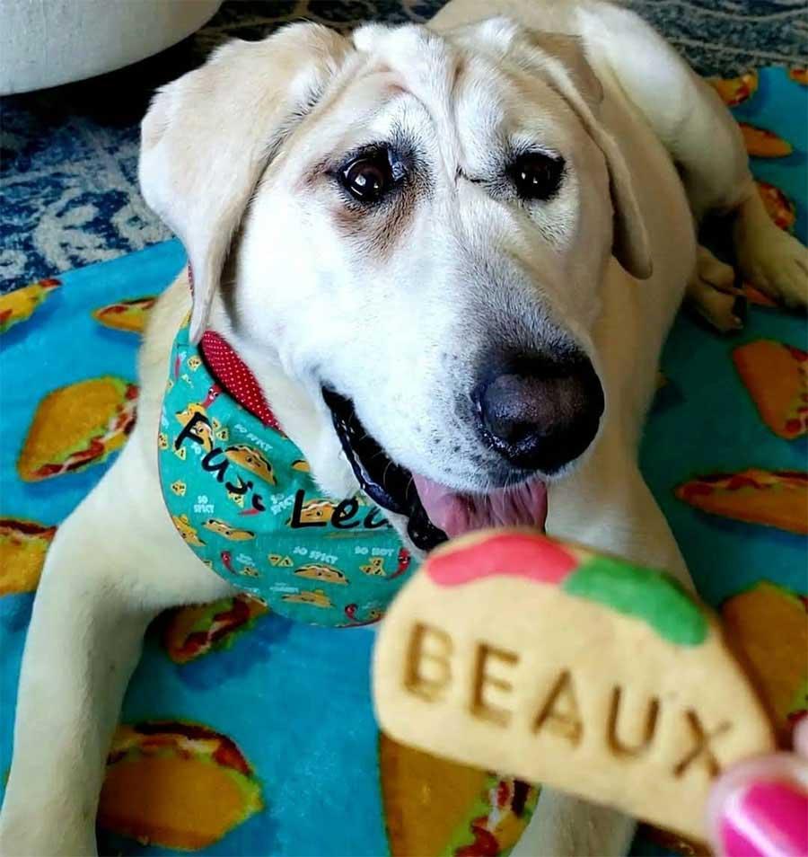 chien abandonné plusieurs fois femme voit beauté