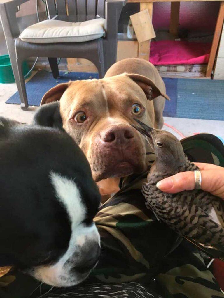 chien apport oiseau attend tout va bien